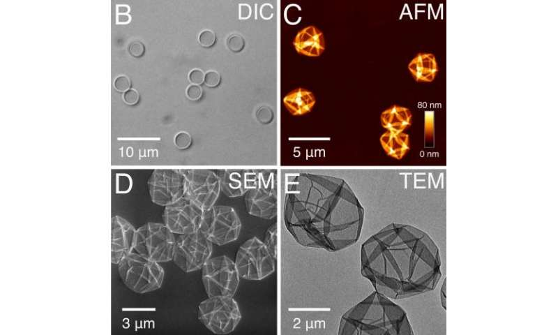 Researchers discover simple coating technique using tannic acid and iron