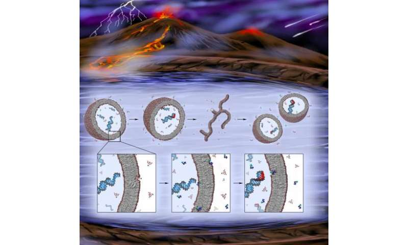 Researchers find a missing component in effort to create primitive, synthetic cells
