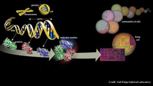 Genome instability studies could change treatment for cancer and other diseases