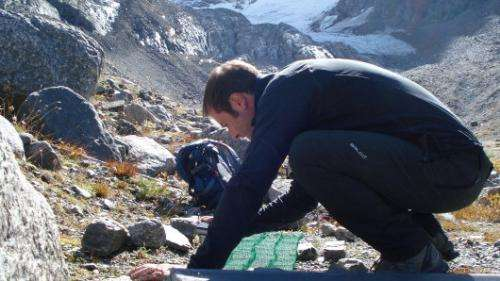 Germination of alpines: Climate change could shift the timing of seed germination in alpine plants