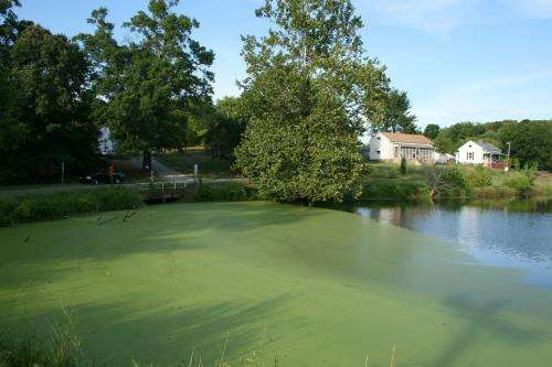 Going green: Nation equipped to grow serious amounts of pond scum for fuel