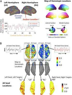 Left brain, right brain: Different patterns of cortical interaction