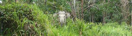 GPS, camera traps and dung expose the secret life of endangered elephants