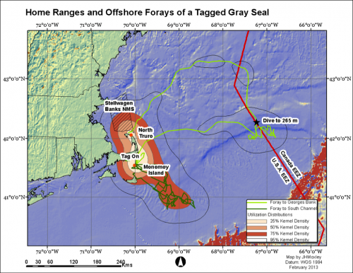 Grey seal's travels hint at animal's unknown habits