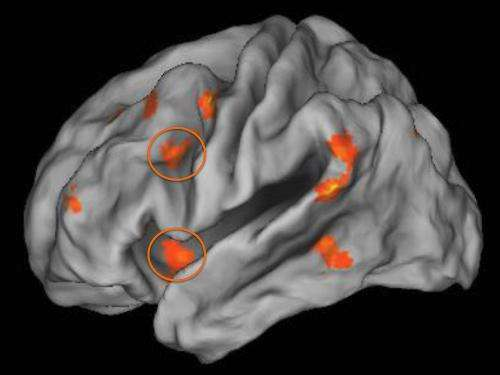 Growing up poor and stressed impacts brain function as an adult