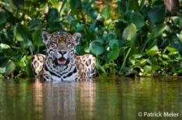 Guyana government and Panthera sign historic jaguar conservation agreement