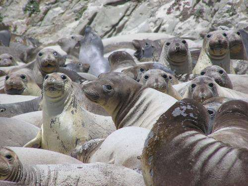 H1N1 discovered in marine mammals