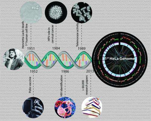 Havoc in biology's most-used human cell line: Genome of HeLa cells sequenced for the first time