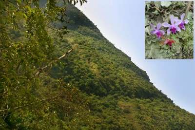 Himalayan flowers shed light on climate change