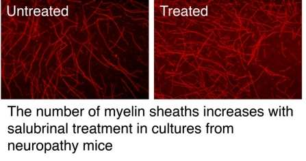 Hitting 'reset' in protein synthesis restores myelination