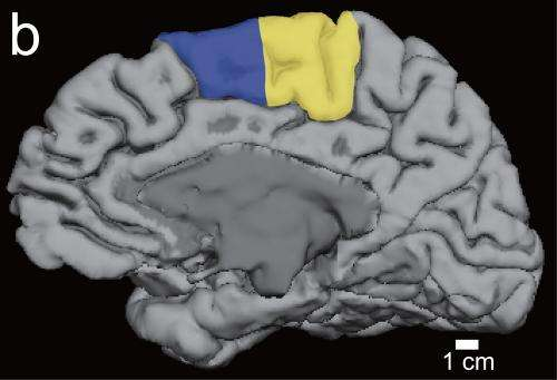 How sleep helps brain learn motor task