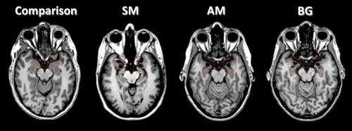 Human brain is divided on fear and panic