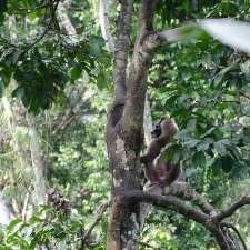 Hunting for meat impacts on rainforest