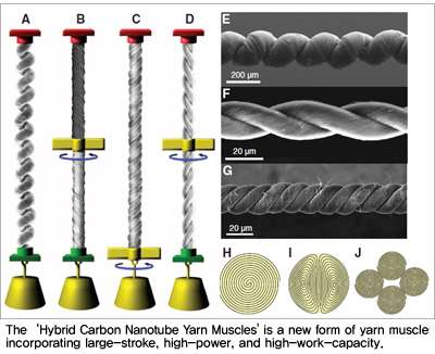 Hybrid carbon nanotube yarn muscle