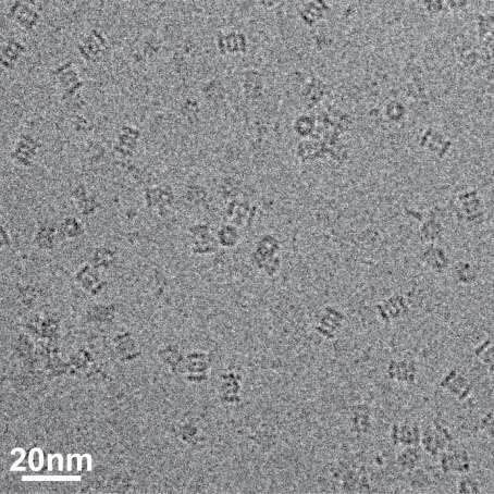 Complex responsible for protein breakdown in cells identified using Bio TEM