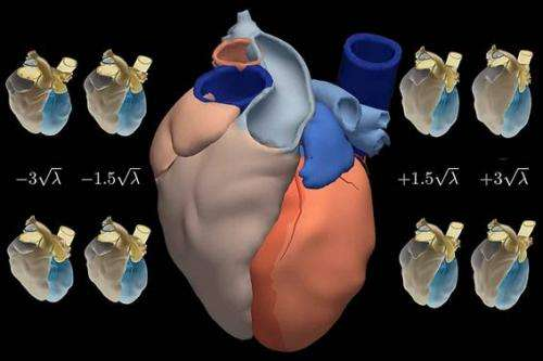 An atlas of the human heart is drawn using statistics