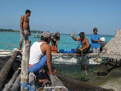 Indonesian fishing communities find balance between biodiversity and development