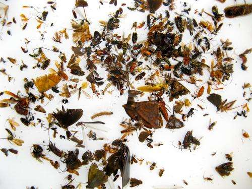 'Insect soup' holds DNA key for monitoring biodiversity