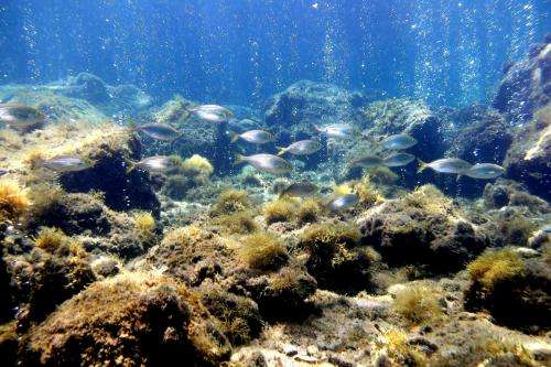 Insight into marine life's ability to adapt to climate change