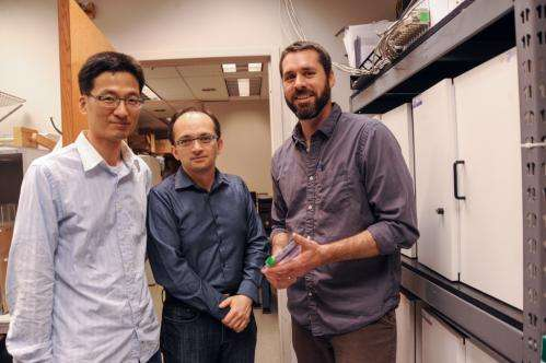 IUPUI neuroscience research collaboration examines neural synchronization patterns during addiction