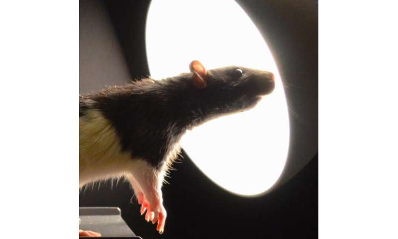 Light switches brain signaling: Longer days bring 'winter blues' for rats