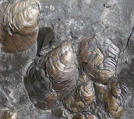 Jurassic clues to current declining size of marine life