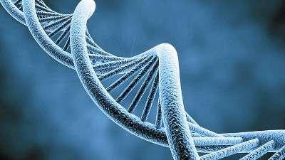 """Kissing genes"" breakthrough"