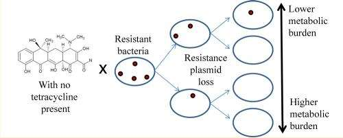 Lack of energy an enemy to antibiotic-resistant microbes
