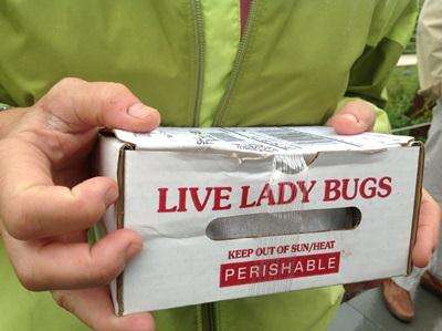 Lady bug, lady bug, eat up