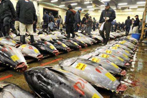 Large bluefin tunas are displayed before the first trading of the year at Tokyo's Tsukiji fish market on January 5, 2010