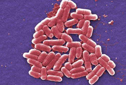 Live pathogens: Rapid detection technique developed