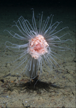Major reductions in seafloor marine life from climate change by 2100