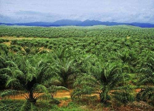 Major study investigates human impacts on tropics