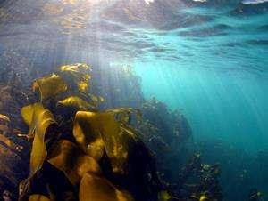 Marine algae can help acne sufferers