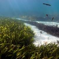 Marine plants provide defence against climate change
