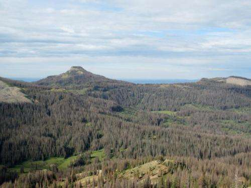 Massive spruce beetle outbreak in Colorado tied to drought, according to new CU study