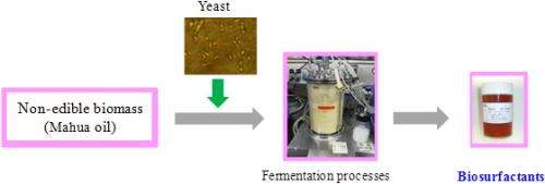 Mass-production of high-performance surfactants from non-edible biomass using yeast