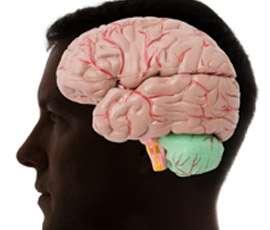 Mathematicians help to unlock brain function