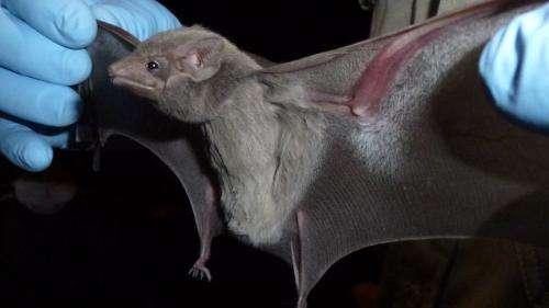 MERS virus discovered in bat near site of outbreak in Saudi Arabia