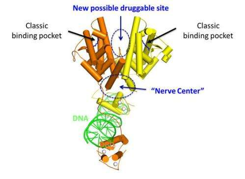 Molecule's structure reveals new therapeutic opportunities for rare diabetes