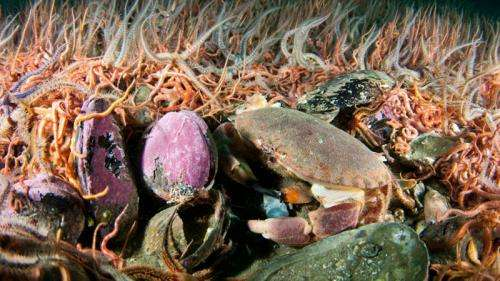 Mussels as big as size 9 shoes set to reveal their secrets
