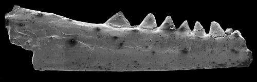 Oldest existing lizard-like fossil hints at scaly origins