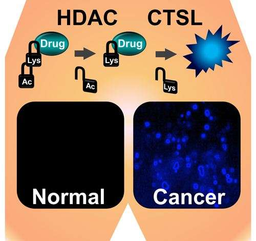 New Cancer Targeting Technique to Improve Cancer Drugs