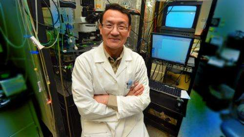 New cause found for muscle-weakening disease myasthenia gravis