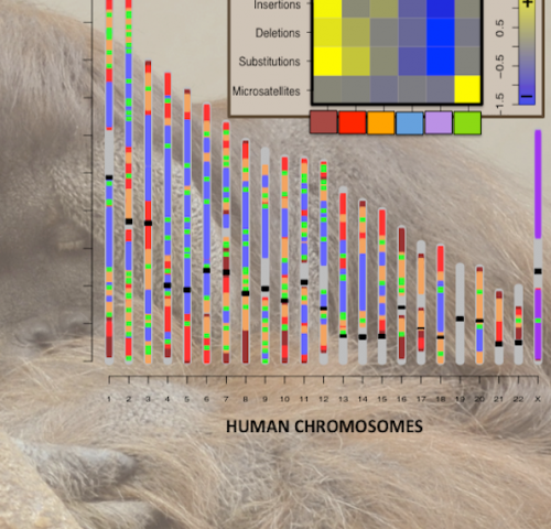 New characterization of human genome mutability catalyzes biomedical research