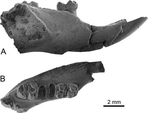 New cricetid rodent found from the early Oligocene of Yunnan, China