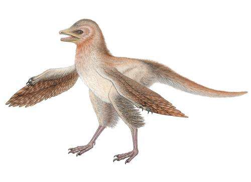 New dinosaur fossil challenges bird evolution theory