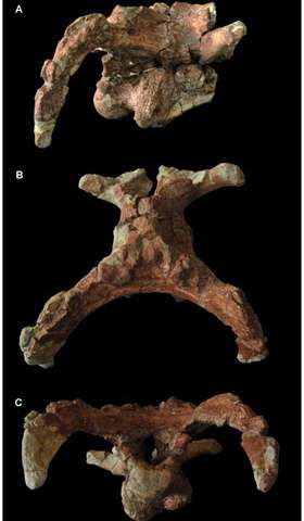 New Hadrosauroid Dinosaur From the Early Late Cretaceous of Shanxi Province, China