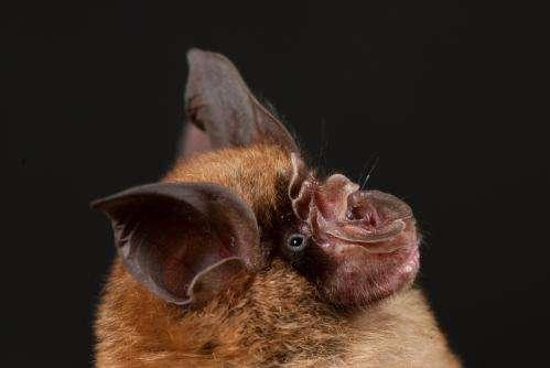 New SARS-like coronavirus discovered in Chinese horseshoe bats