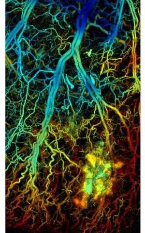 NIH awards Wang highly competitive Transformative Research Award